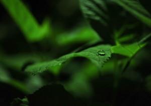 yama-green